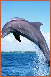dolphin2_thmb
